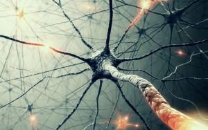 Synapser og ideer lever et rastløst nomadeliv i skallen vår.